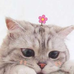 Meo đại Nhan Conconh Cute Cat Wallpaper Cute Baby Cats Cat Icon