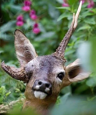 Pin de Joshua J. Cadwell en Antlers. | Pinterest