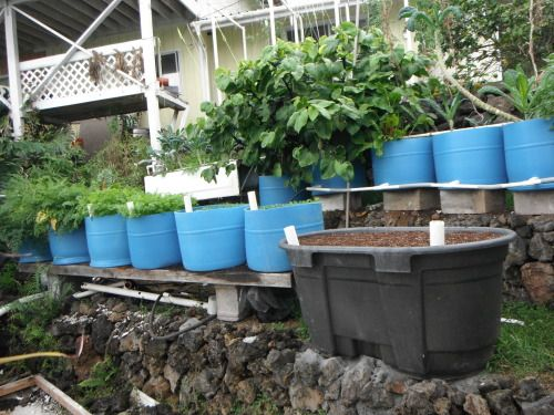 wicking bed design aquaponic