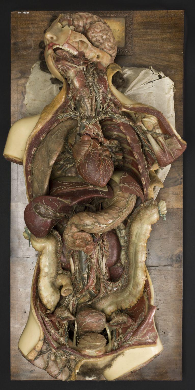 Francesco Calenzuoli. Wax Anatomical Model of a Female Showing ...
