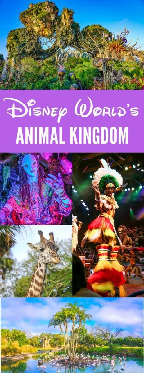 The Must Do Guide to the Disney Animal Kingdom Lodge and Theme Park #animalkingdom