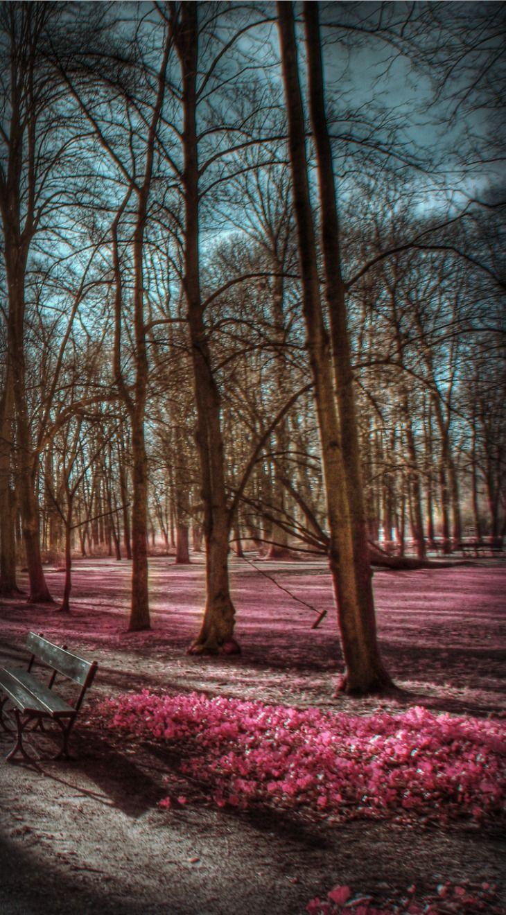 Benches In The Lazienki Parc Poland Travel Poland Scenery