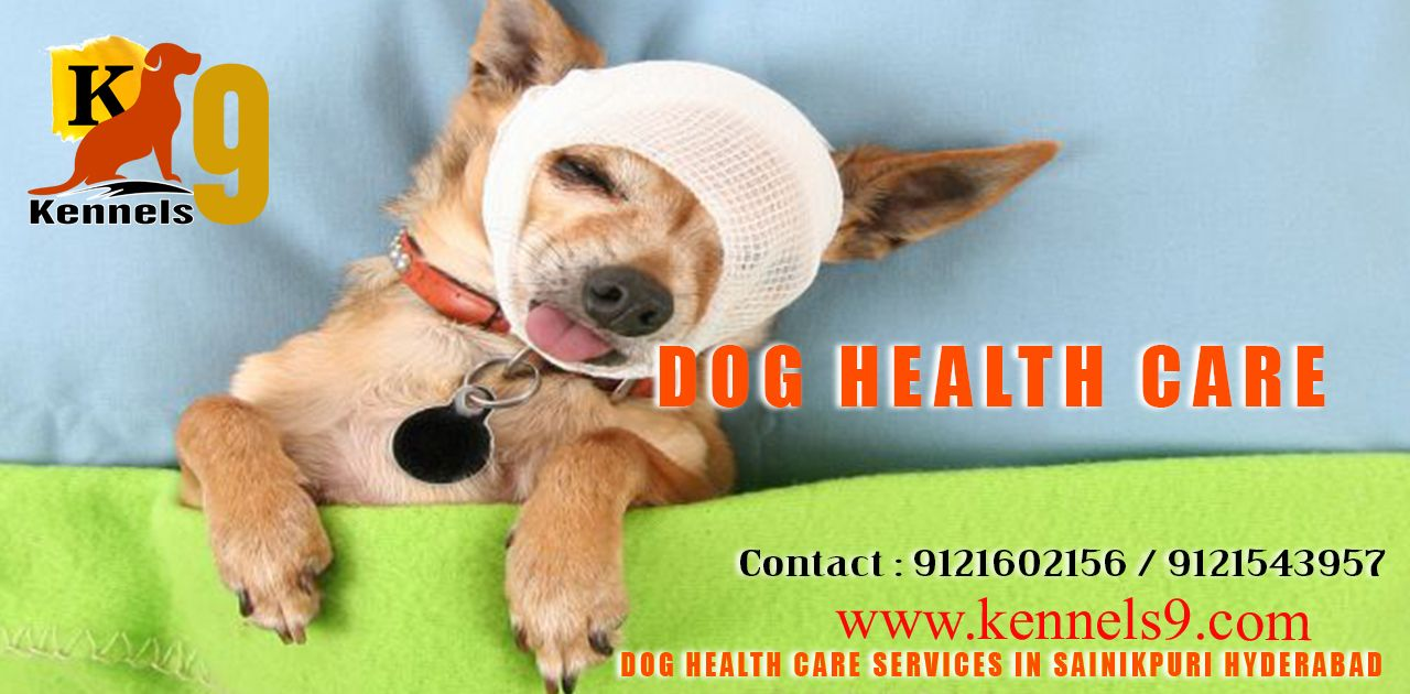 Dog Healthcare And Doggrooming Services At Affordable Prices