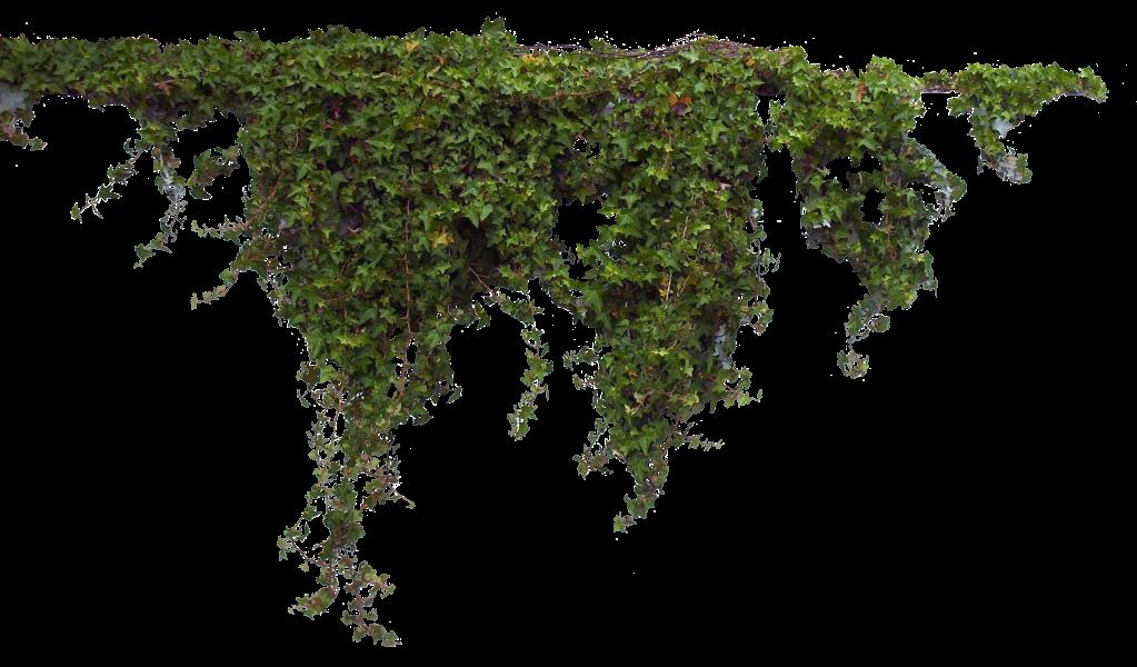 3d Transparent Vines Plant By Madetobeunique On – Fondos de Pantalla