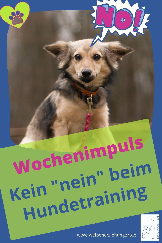 Tipp Der Woche Kein Nein Beim Hundetraining Hundchen Training Hundetraining Und Welpenerziehung