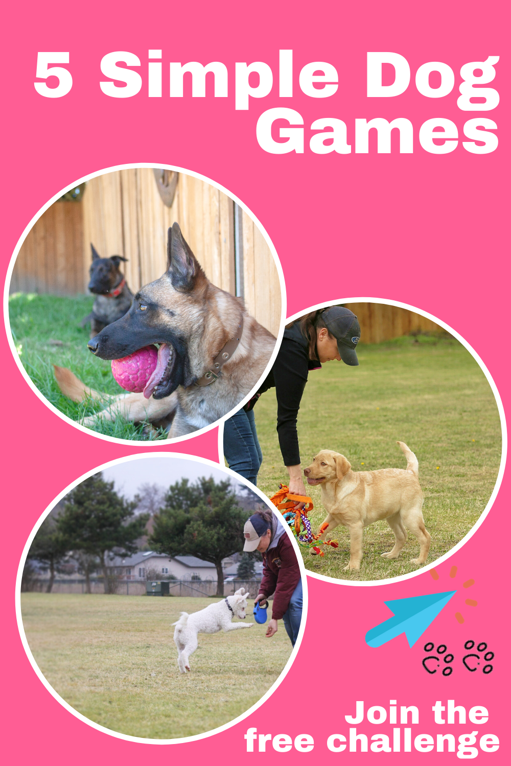 5 Simple dog games you can do to have fun and play while