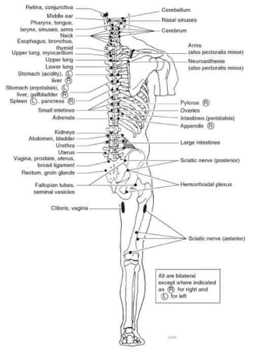acupuncture a comprehensive text pdf