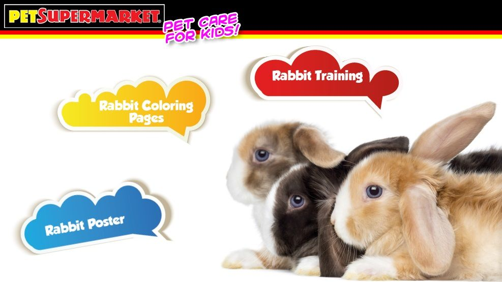 Interactive And Virtual Bunny Training Class For Kids Pet Supermarket Pet Care Pets