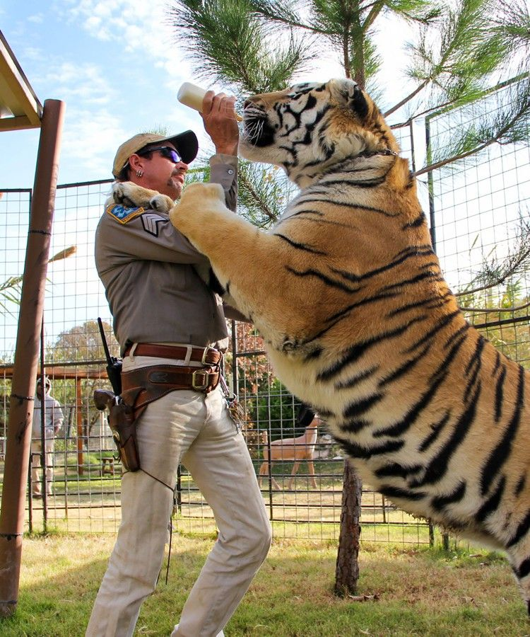 Back When Tiger King Started Filming It Was A Different Documentary Entirely Refinery29 In 2020 Tiger Big Cat Rescue Netflix