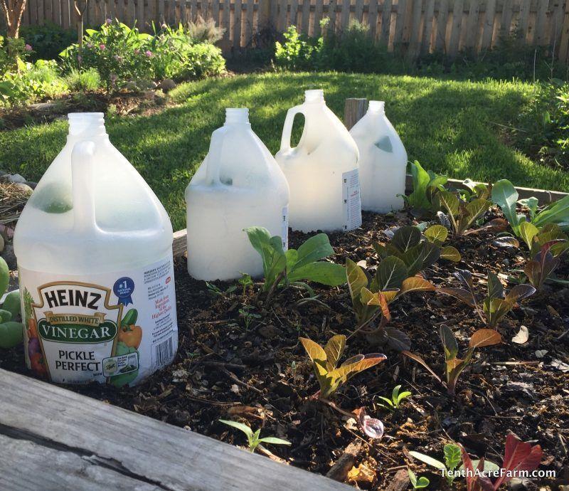 Come la stagione autunnale volge al termine, i giardinieri si rivolgono alle tecniche di estensione stagione per mantenere le colture destra per tutto l'inverno.  cornici fredde sono efficaci a isolare il giardino d'inverno contro un gelo uccisione.