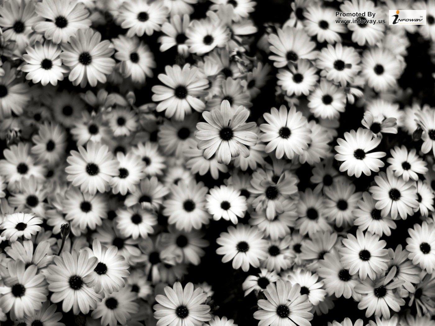 Daisy Flower Tumblr Wallpapers Desktop Background In 2020 Black And White Flowers Daisy Wallpaper White Flower Wallpaper