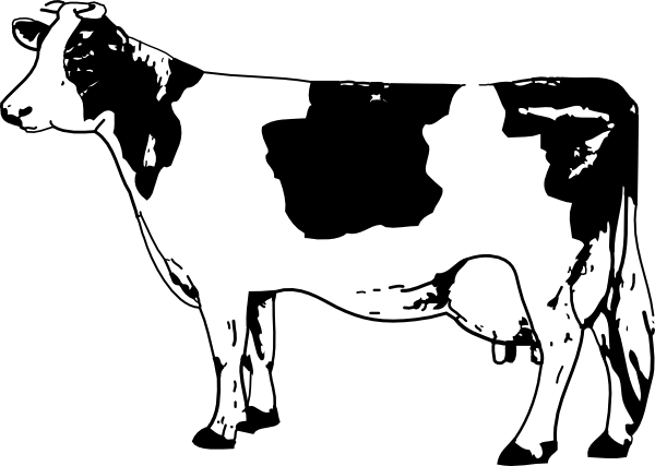 Line Drawing Cow : Free line drawings cow drawing clip art engraving