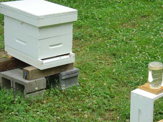 How To Get Rid Of Bees In Cinder Blocks