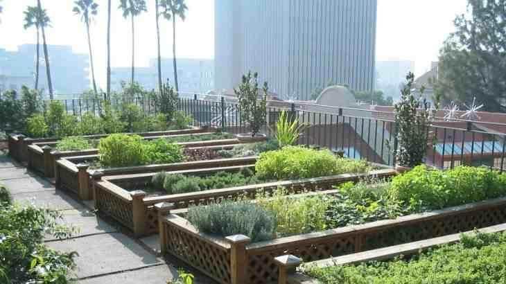 كيفية زراعة اسطح المنازل بالصور من البداية للنهاية إنتشرت فى الآونة الأخيرة مطالبات بالبعد عن التربة و الإتجا Veggie Garden Design Urban Farmer Garden Layout