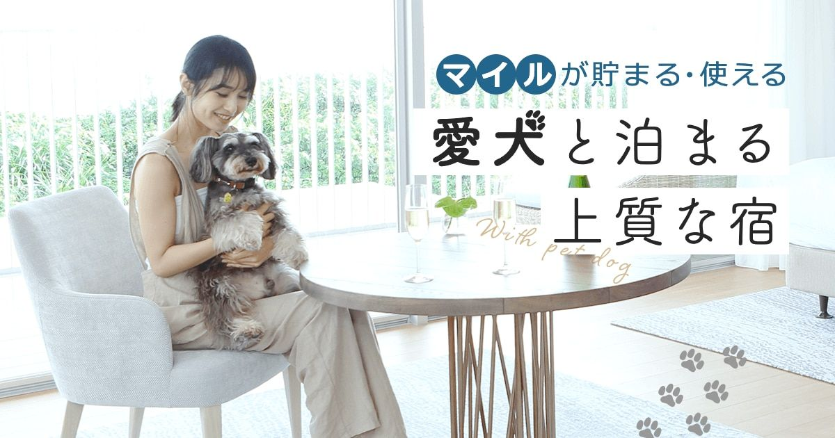 Ana公式サイト Go To Travel ペット 愛犬と同伴で泊まれる宿 ホテル特集 マイルが貯まる 使えるおすすめのペット可の宿泊旅行ツアーをご紹介 ペット 旅行 ホテル ペット