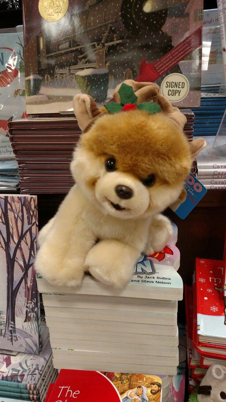 Popular Boo Chubby Adorable Dog - 1bec4d6e2ec950adc7bd8175225e9adb  Trends_378296  .jpg