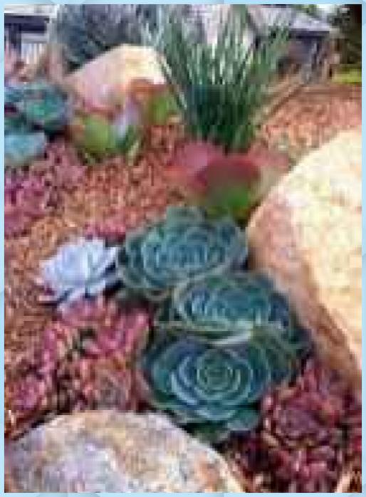 Photo of 85 bellissime idee paesaggistiche sul giardino roccioso del cortile – -…