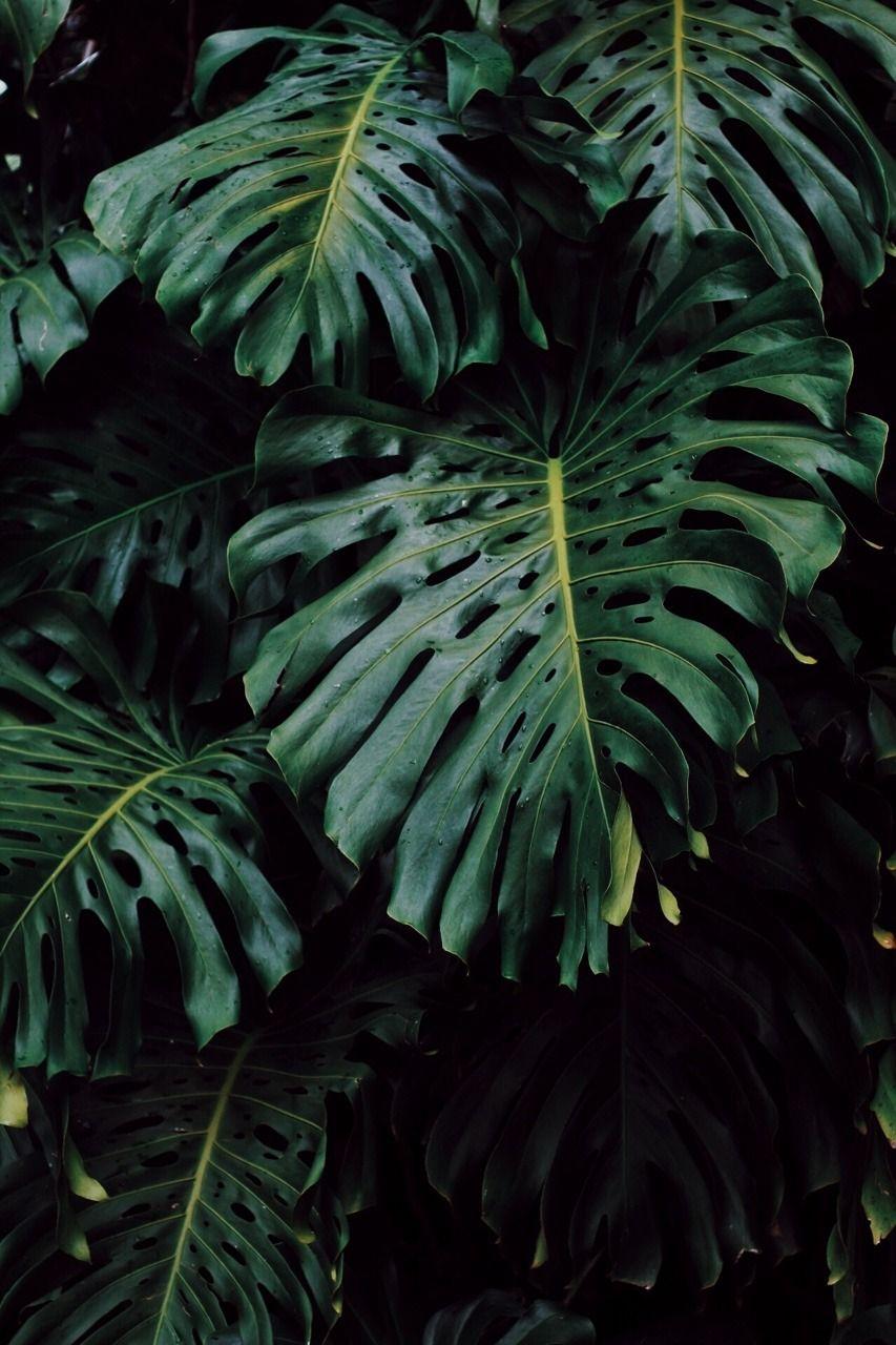 Monstera Tumblr Iphone Wallpaper Plants Plant Wallpaper Small Garden Landscape