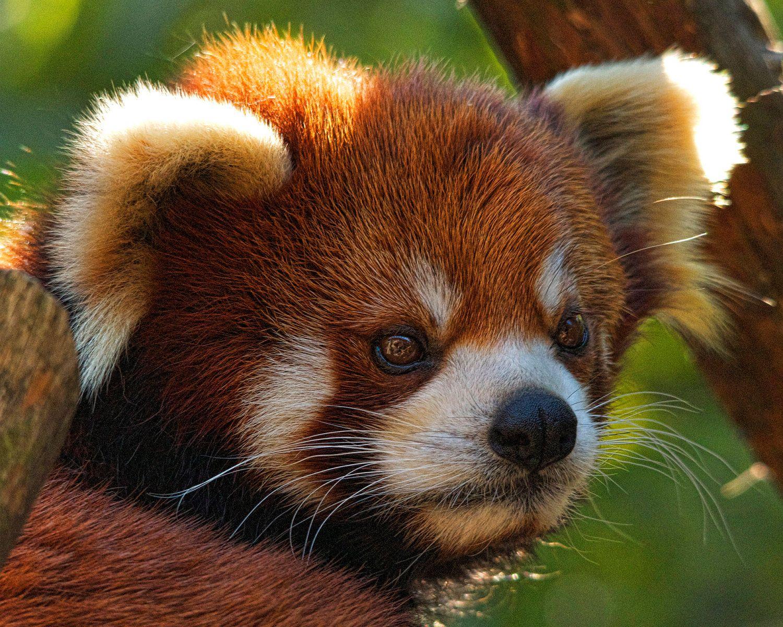 Is a cute Alisa Panda nude (72 foto and video), Pussy, Is a cute, Selfie, swimsuit 2015