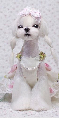 Wondrous 207150 200209546678592 181760871856793 595913 1242680 N Dog And Hairstyle Inspiration Daily Dogsangcom