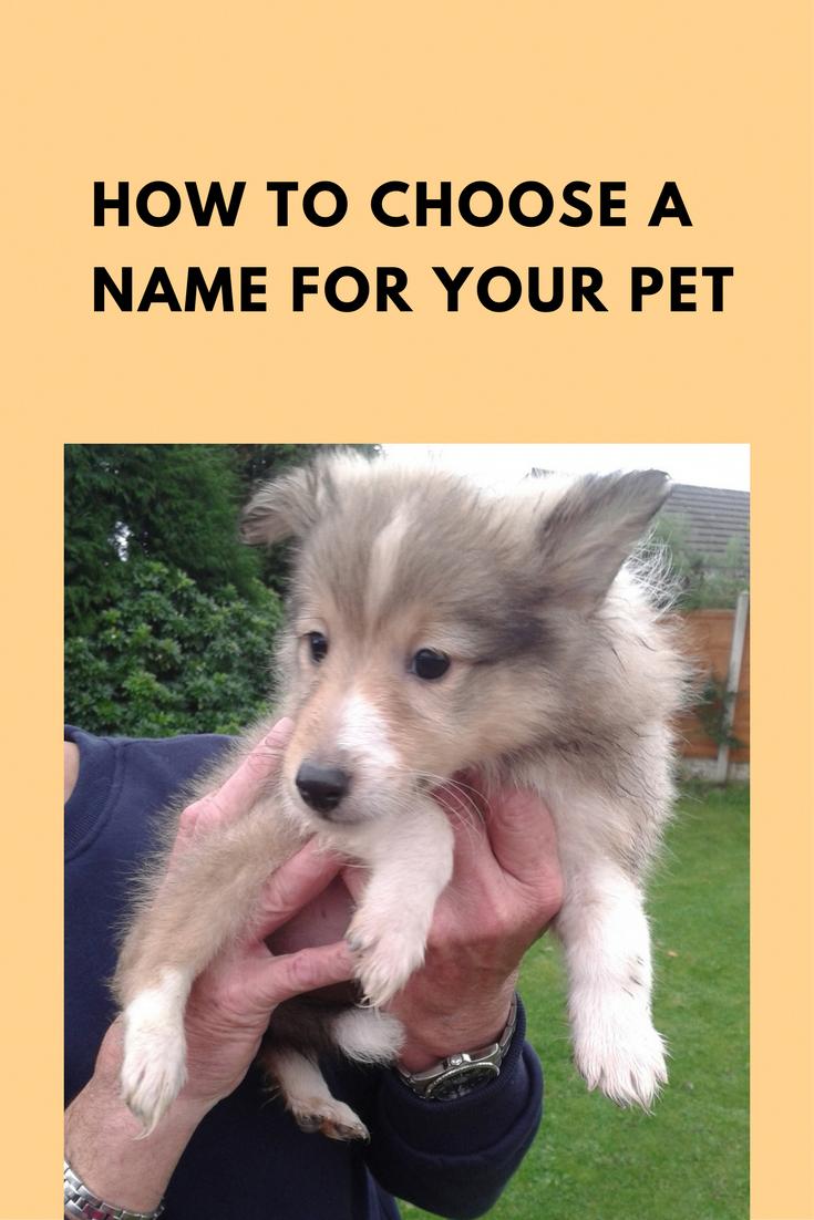 Pet names how do you choose chicken coop construction pinterest