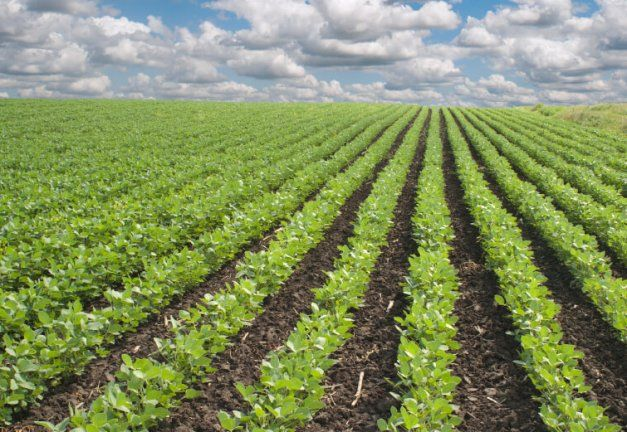 Nigeria, Potential Hub For Organic Agriculture In Africa–official