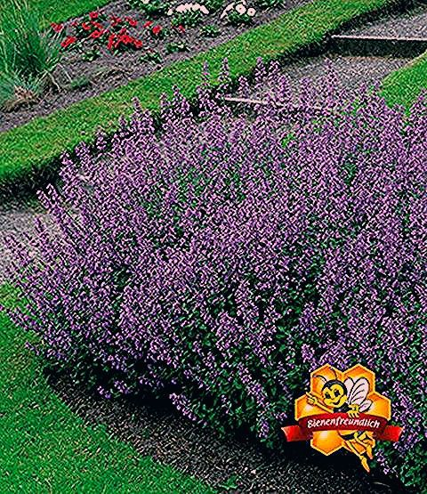 Gartengräser Winterhart