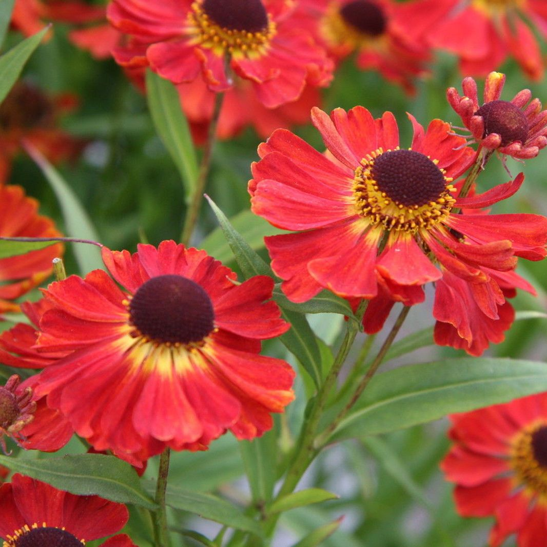 10 Colorful Perennials That Bloom In The Fall Fall Planting