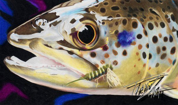 """Big Cottonwood Brown"" Colored pencil drawing of a Brown Trout from the Big Cottonwood Creek by Travis J.Sylvester. Reference photo courtesy of ""Rocki"""