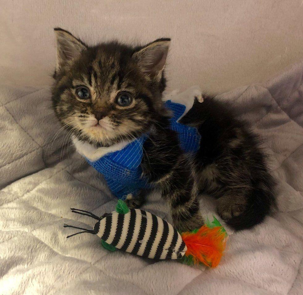Kitten Found Freezing In Park Brought Back From The Brink And Gets Life Saving Surgery Kittycat Kittenrescue Anima Kitten Kitten Rescue 6 Week Old Kitten