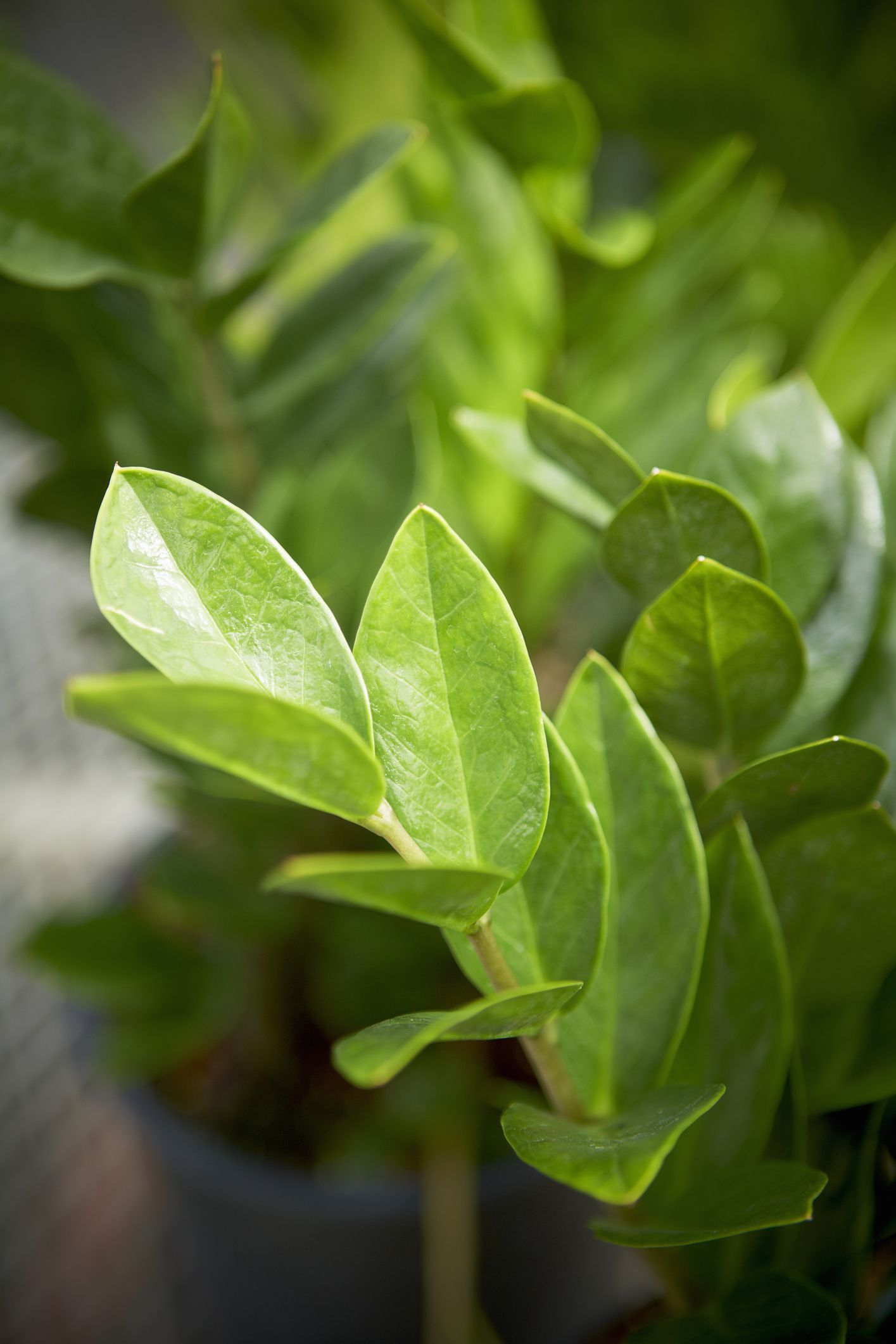 9 Houseplants You Can Totally Neglect Plants, Plants