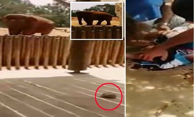 A schoolgirl has died after being struck on the head by a rock hurled at her by an elephant at a zoo in the the Moroccan capital Rabat. WARNING: Graphic content.