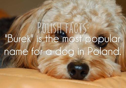 Fun Facts about Poland Never a Dull Day in Poland