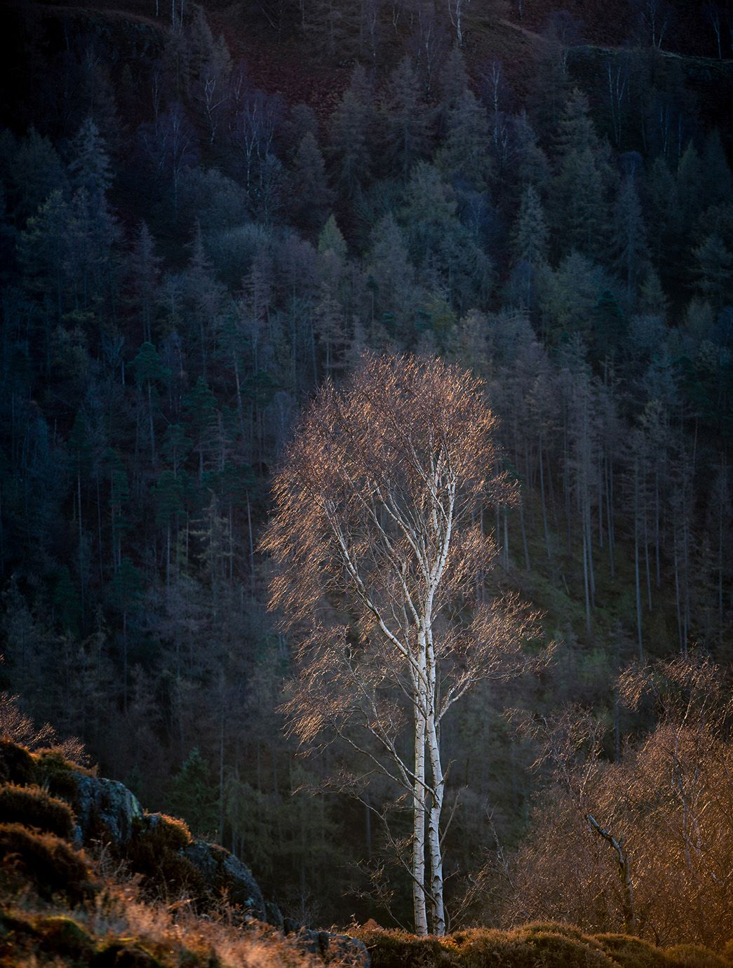 Winners Of The Landscape Photographer Of The Year Competition 2018 Unveiled Landscape Photography Tutorial Landscape Photography Landscape