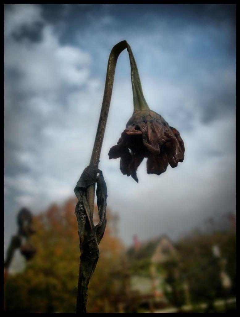 исторический картинка умирающего растения был клуб