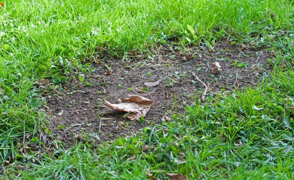 So Erneuern Sie Kahle Stellen Im Rasen Rasen Pinterest Rasen