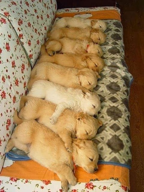 Sleeeeepy? We are too! Check out these adorable sleeping dogs.