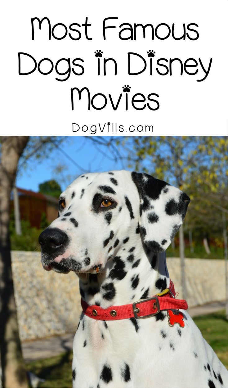 Top 5 Most Famous Dogs in Disney Movies Famous dogs