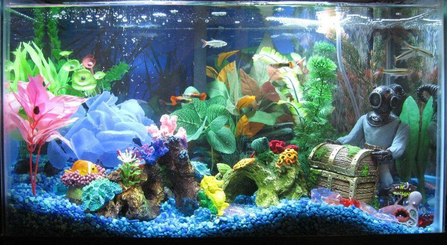 Fish Tank Setup 10 Gallon Fish Tank Neon Tetra Aquarium