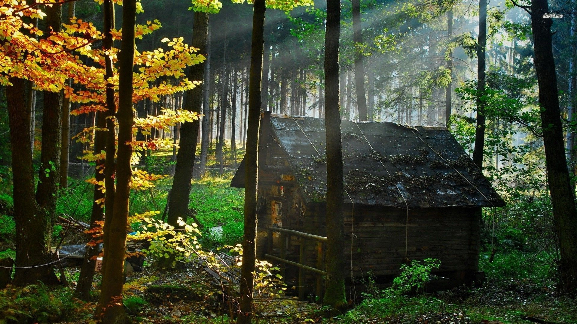 abandoned house wood - Google Search | Anime movie ...