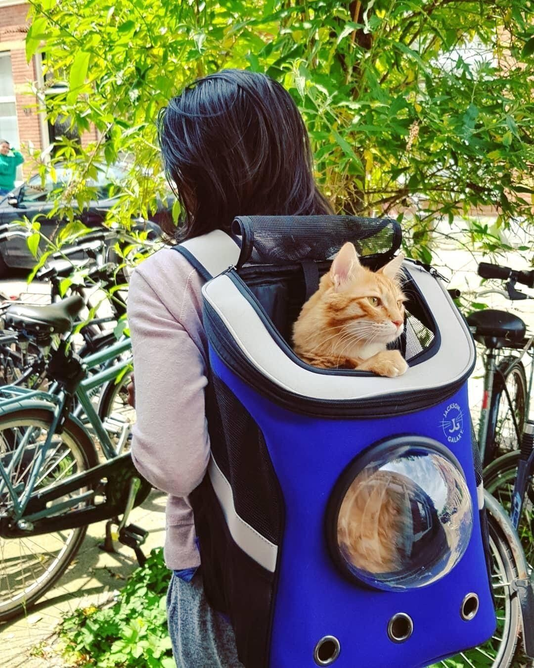 The Jackson Galaxy Convertible Cat Backpack Carrier Cat Backpack Carrier Cat Backpack Jackson Galaxy