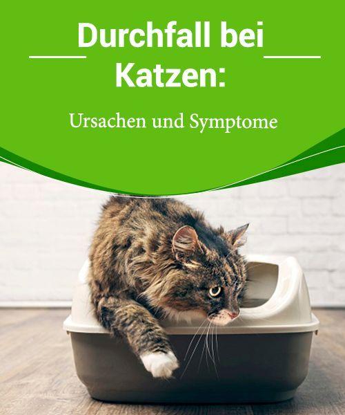 Durchfall Bei Katzen Ursachen Und Symptome Durchfall Bei Katzen Ist Nicht Immer Einfach Zu Erkennen Je Nachdem Welcher Tei In 2020 Katze Durchfall Katzen Durchfall