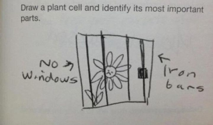 Best Funny Test Answers  These Funny Test Answers From Kids Will Have You Cracking up 2