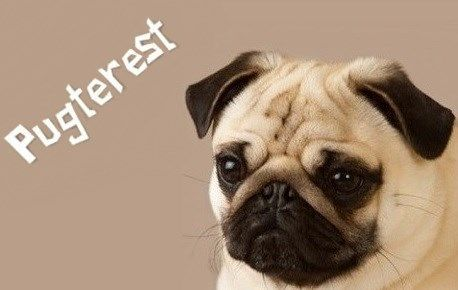 Just Think There Are Ten Thousand Photos Of Pugs From Around The