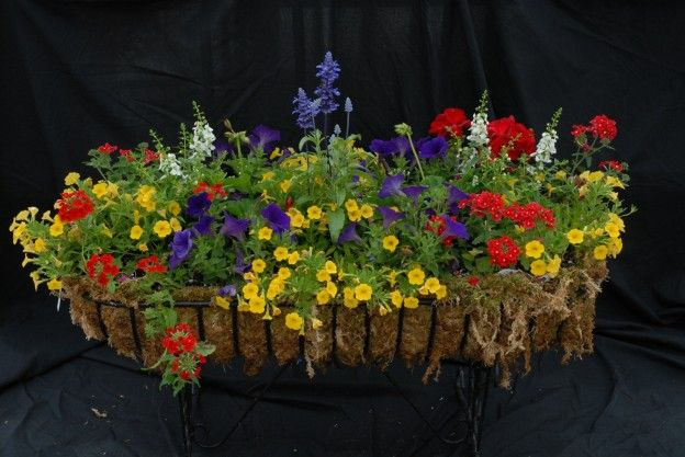 Creating beautiful container gardens and window boxes.