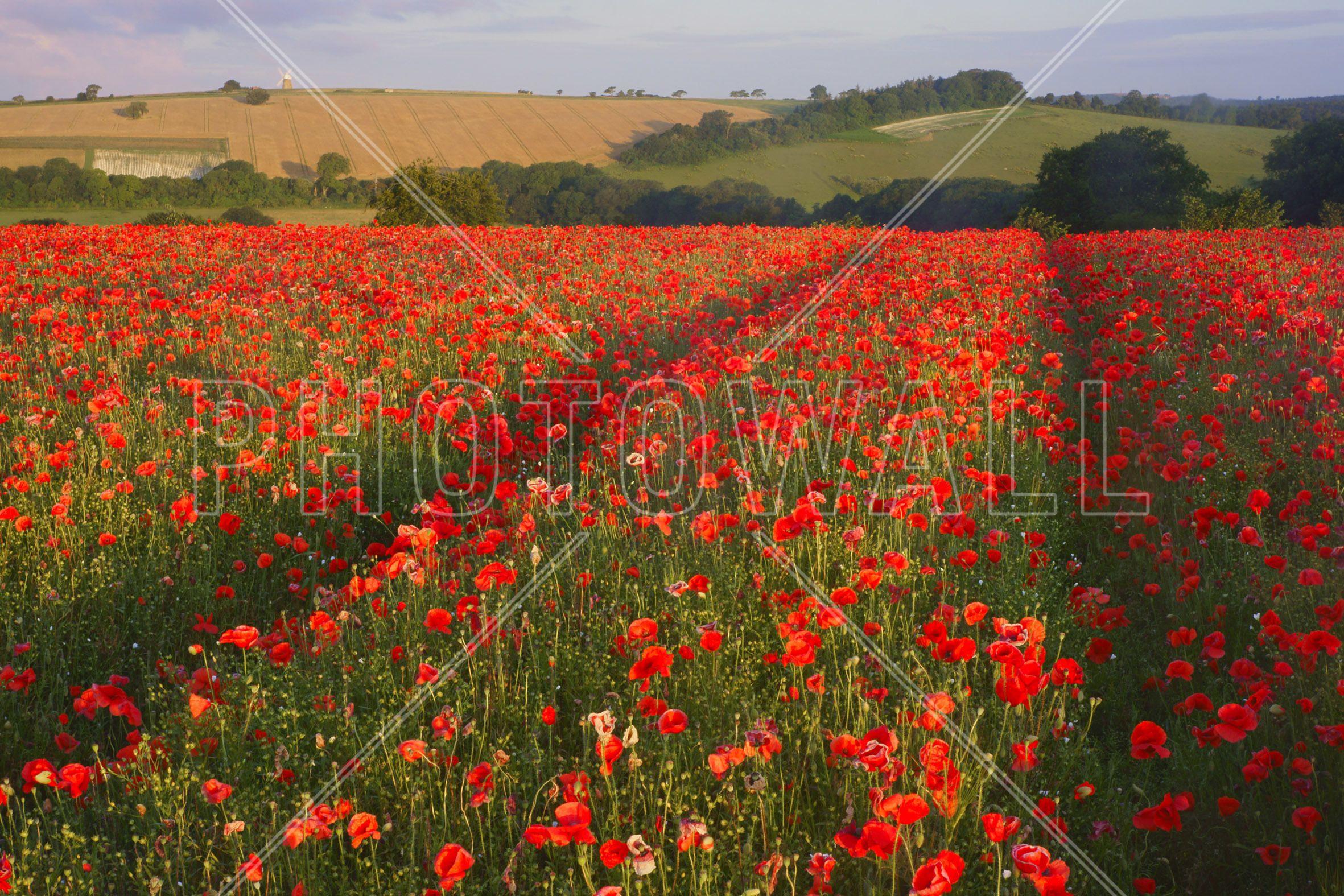 pin auf photoshop bild leinwand drucken leinwanddruck bilder