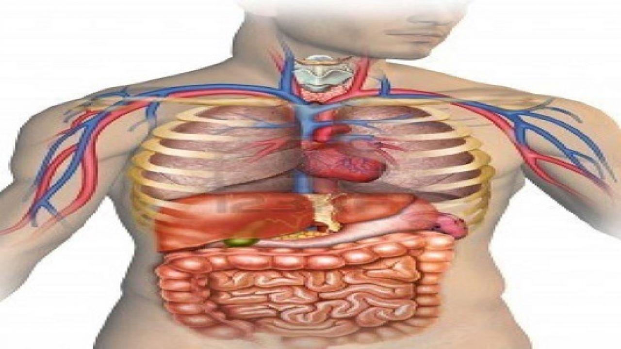 كم جهاز في جسم الإنسان Health Products Design Nursing School Prerequisites Body Health