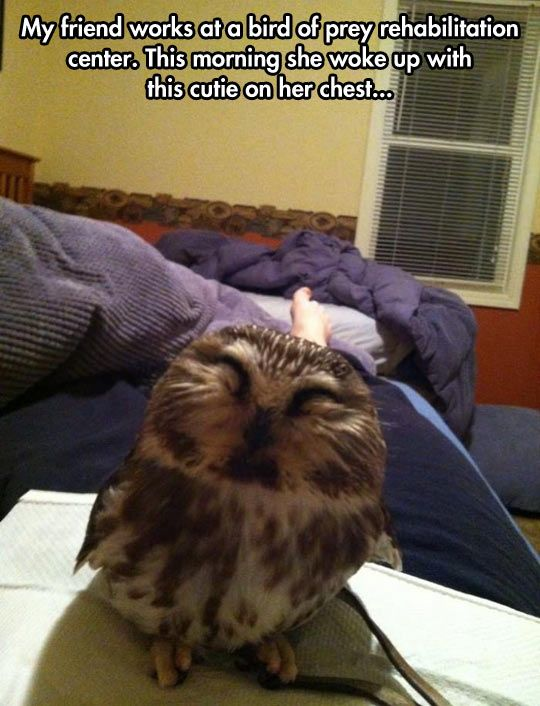 Good Morning Little Owl Pal Cute Animals Funny Animal Pictures Funny Animals