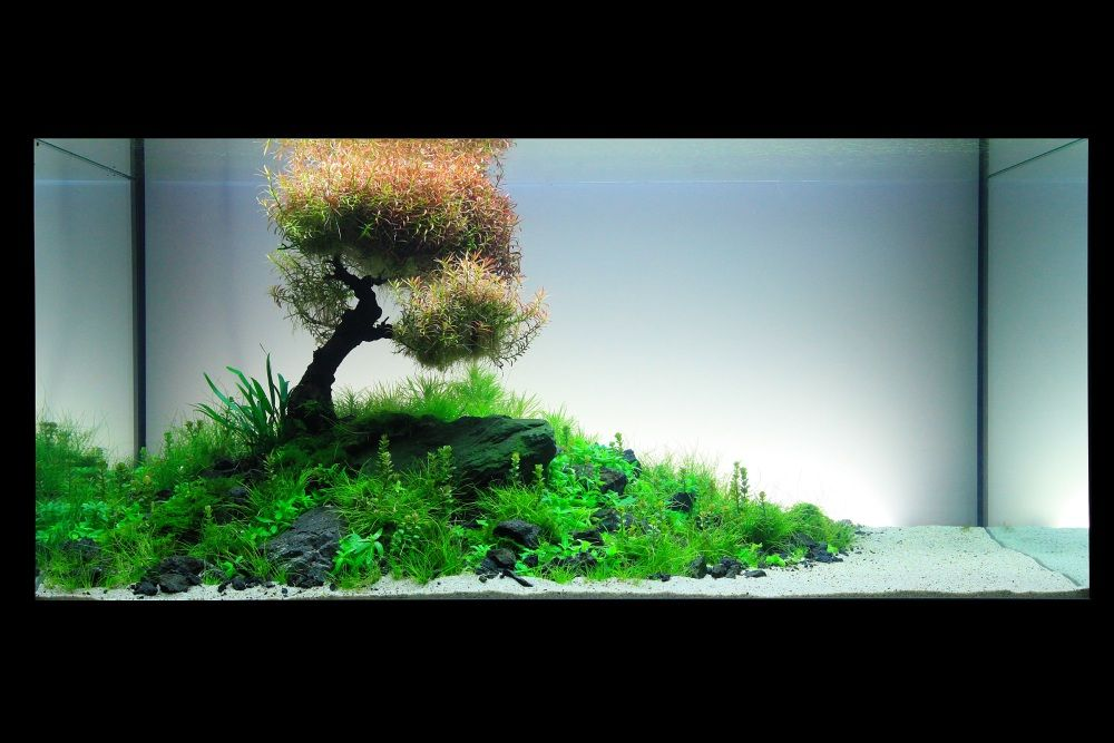 Image gallery japanese planted aquarium for Plante aquarium