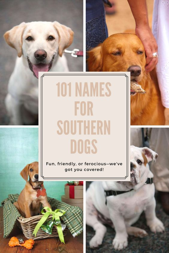 Our Favorite Names For Southern Dogs Girl Dog Names Dog Names